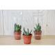 Mini serre cactus en pot personnalisable