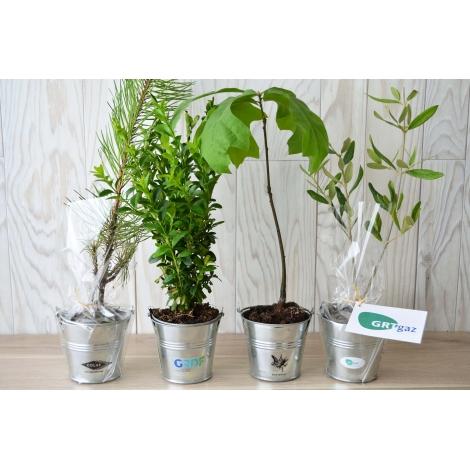 Le Plant d'arbre en pot zinc à personnaliser.