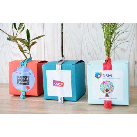 Cube personnalisable avec plant d'arbre