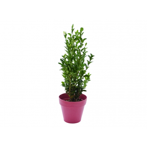 Plant d'arbre avec pot fibre de bambou personnalisé