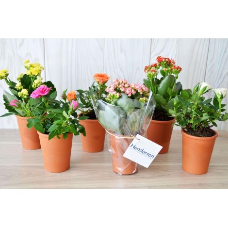 Mini plante fleurie en pot terre cuite à personnaliser.