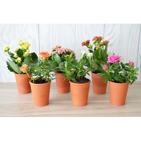 Mini plante fleurie en pot terre cuite publicitaire