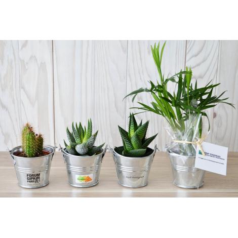 Mini plante dépolluante en pot zinc personnalisable.