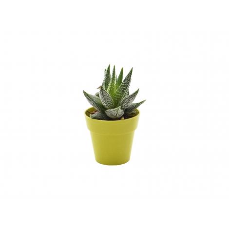 Plante déco en pot écolo à personnaliser