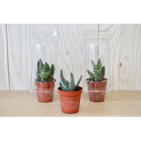 Mini serre cactus en pot personnalisable.