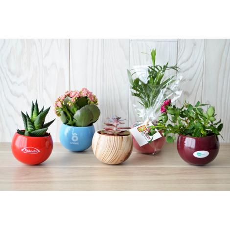 Plante en pot céramique aimanté personnalisable.