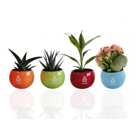 Plante en pot céramique aimanté publicitaire