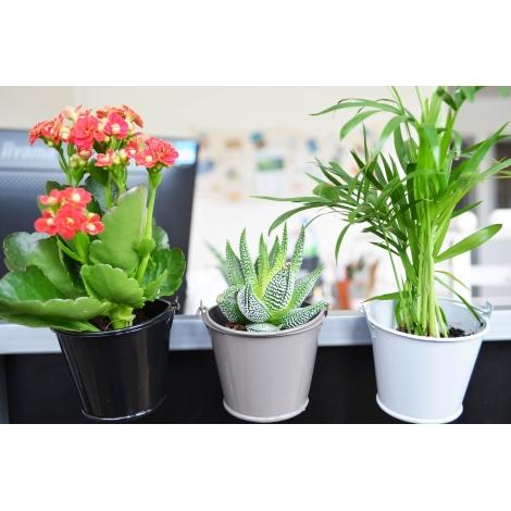 Plante en pot zinc publicitaire aimanté