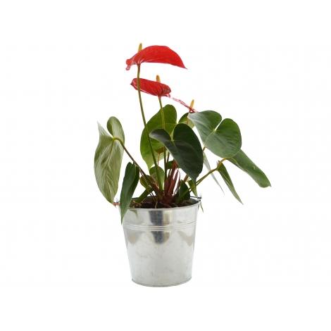 Grande plante déco pot en zinc personnalisable