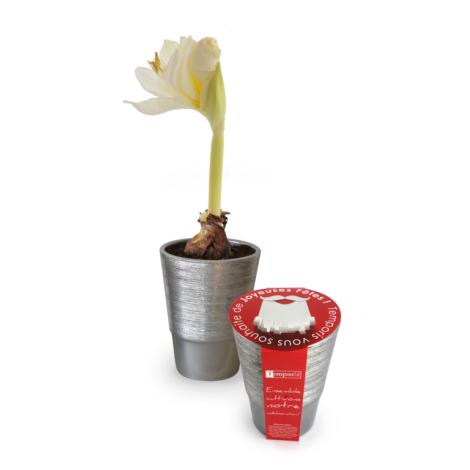Kit de plantation - Bulbes de Noël pot argent personnalisable.