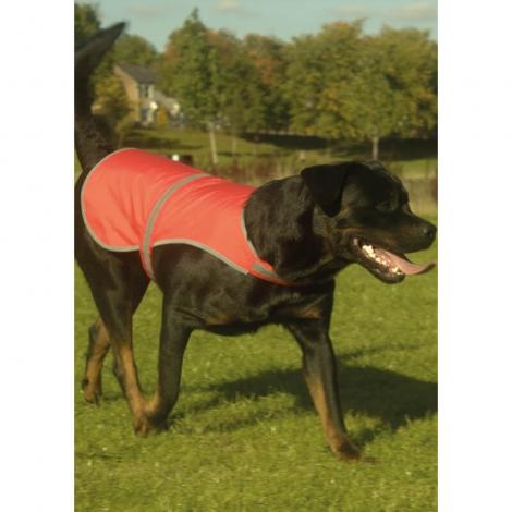 Veste pour chien haute visibilité