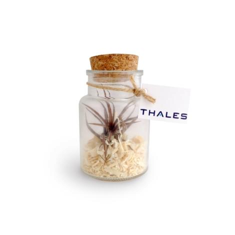 Terrarium en bouteille publicitaire