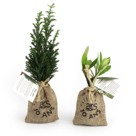 Mini plant d'olivier en pochon publicitaire