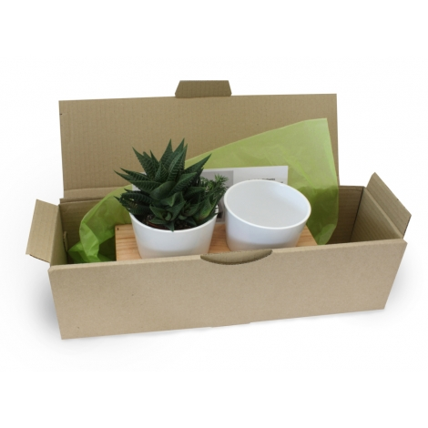 Plateau publicitaire et double pot avec plante dépolluante