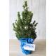 Sapin de Noël décoré personnalisable