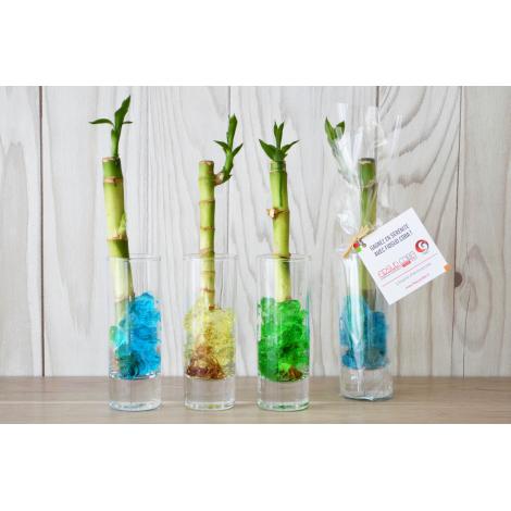 Canne chinoise en vase à personnaliser