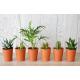 Plante dépolluante en pot terre cuite publicitaire