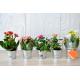 Mini plante fleurie en pot zinc publicitaire
